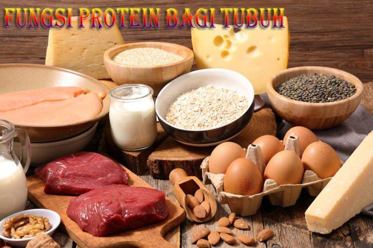 Berbagai Fungsi Protein Yang Penting Bagi Tubuh